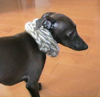 犬マフラー