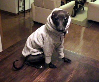 犬服 1作目