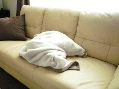 イタグレの毛布包み