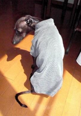 犬Tシャツ 後姿